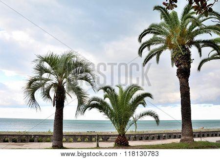 Waterfront Views Gagra, Abkhazia