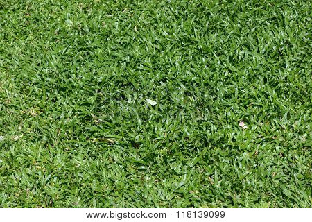 The Bright Green Of The Lawn.