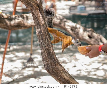 Sciurus on a Tree