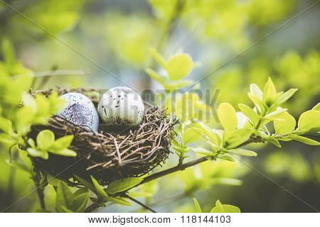 Bird nest on branch with easter eggs for Easter