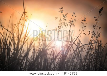 Dry grass sky at sunset,silhouette of grass.