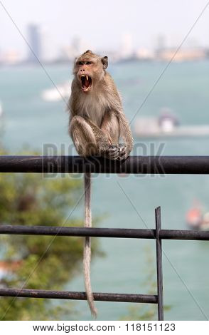 Monkey On A Railing