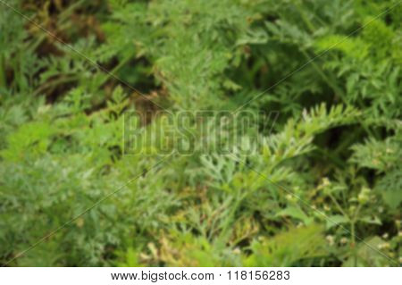 Defocused Photo Of Green And Lightly Brown Bush
