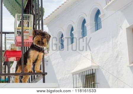 Cute Dog Standing On Balcony