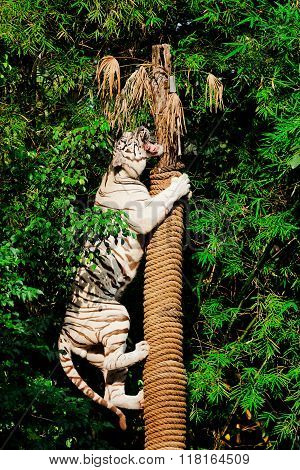 Portrait of Amur Tigers on tree in nature