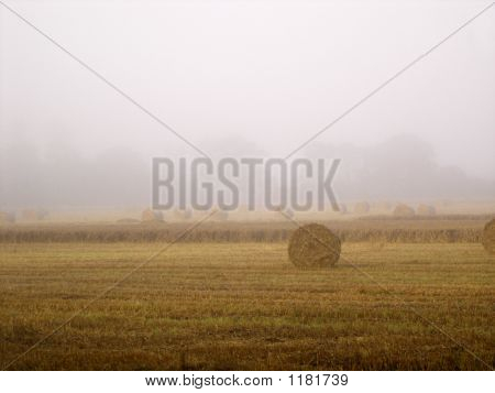 Misty Morning Hayfield
