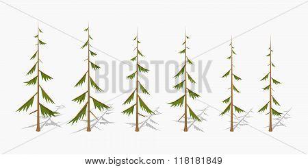Shabby pine trees