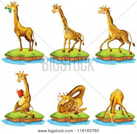 Giraffes in different actions on island illustration