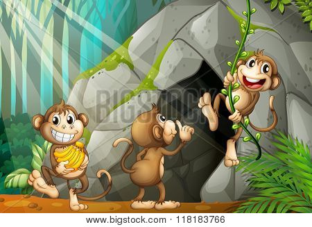 Three monkeys living in the cave illustration