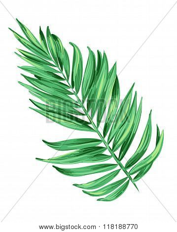 illustration of a tropical leaf. Artistic brush stokes create a layered botanical illustration of a palm. single isolated element for decoration, fashion. Nature, tree, aloha colors.
