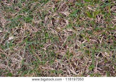 Dying grass texture