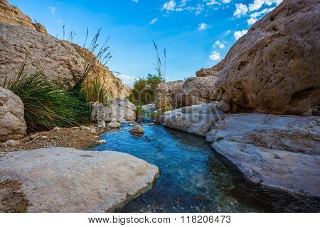 Wonderful Middle Eastern landscape. The stream of cold pure water flows through the beautiful gorge Ein Gedi, Israel
