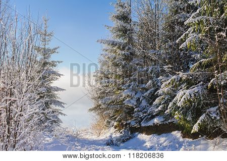Snow covered trees in winter mountains