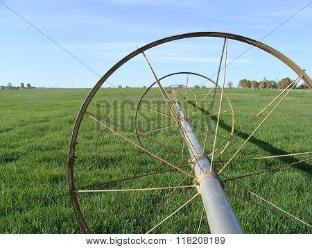 Side Roll in Alfalfa Field