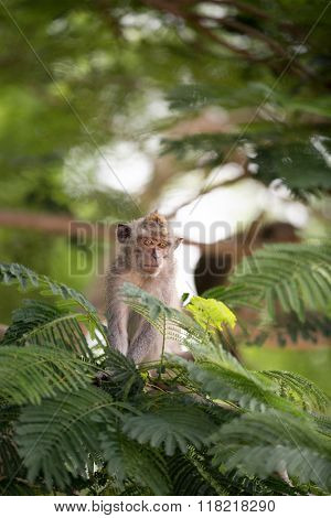 Monkey  in tropical forest, animal and wildlife