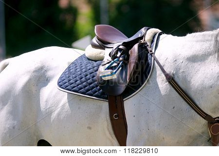 Beautiful Leather Saddle On Back Of A Horse