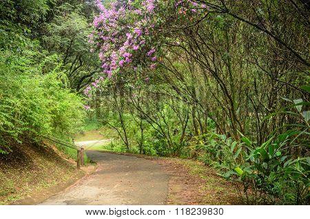 footpath between trees