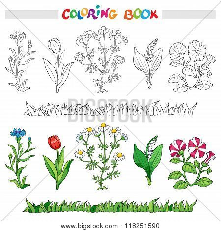 Coloring Book With Flower Set . Vector Illustration.