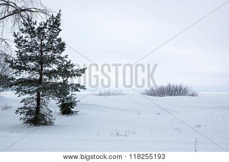 Finnish Gulf In Winter
