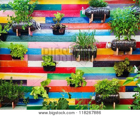 Organic vegetable garden is Vertical garden on colorful background