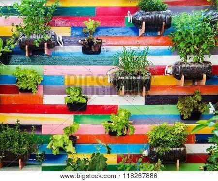 Organic vegetable garden is Vertical garden on colorful background