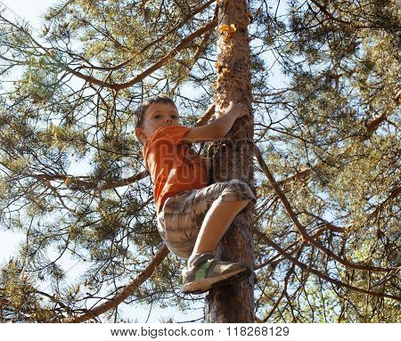 little cute boy climbing on tree hight