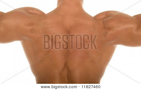 Male body builder shoulders