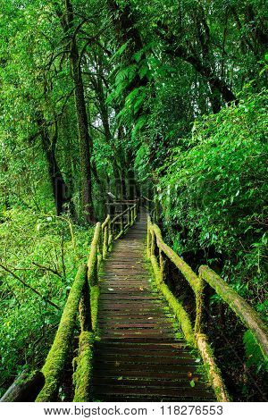 Beautiful rain forest at ang ka nature trail in doi inthanon national park Thailand