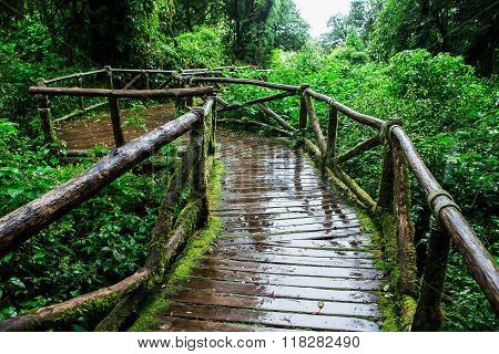 Beautiful rain forest at ang ka nature trail in doi inthanon national park Thailand ** Note: Visible grain at 100%, best at smaller sizes