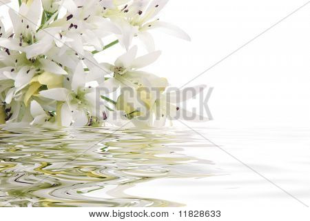 Beautiful white flower in water