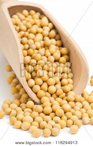 Dry Soybeans In Scoop