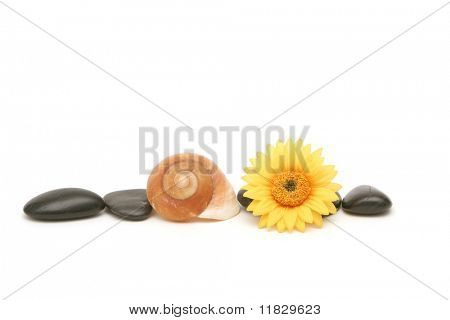 Spa stones, seashell and yellow daisy on isolated white background