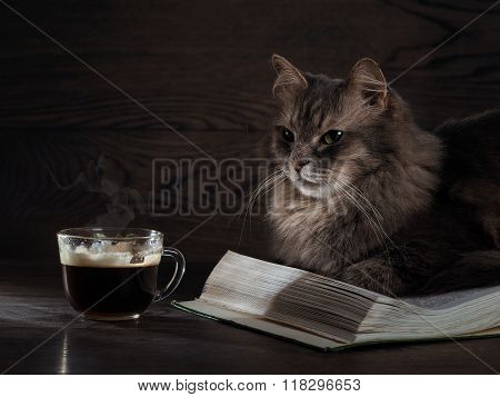 Evening with a cat, a book and a cup of tea or coffee