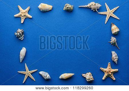Frame shaped seashells on dark blue background