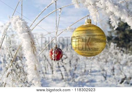 Christmas Ornaments Ball Toy Hanging On Frosted Grass Stems
