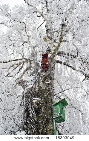 Two Nesting Boxes On Frosted Birch Tree