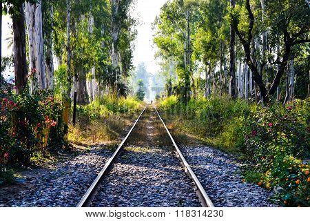 Tracks in India