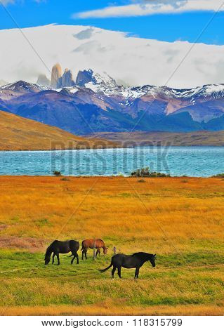 Impressive landscape in the national park Torres del Paine, Chile. Lake Laguna Azul in the mountains. On the shore of Laguna Azul grazing horses