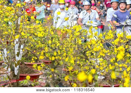 Apricot flowers selling Vietnam Lunar New Year