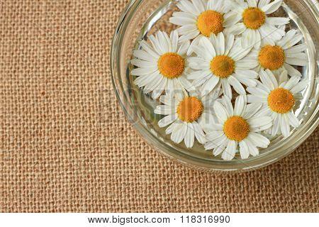 chamomile herbal skincare