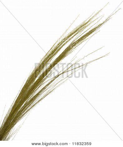 Thin Grass on White