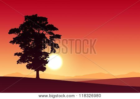 A Lone Tree with Red Sunset, Sunrise.