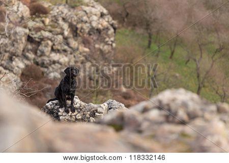 Beautiful mutt black dog Amy on mountains, close-up.