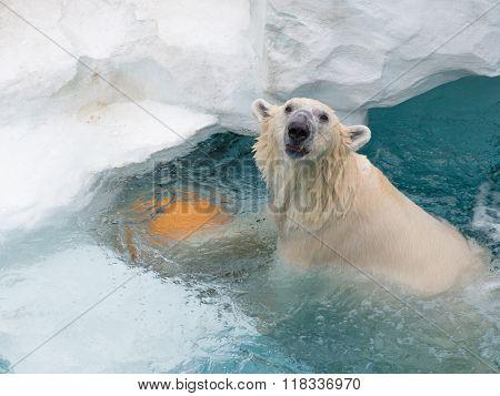 Smart White Cheerful Bear