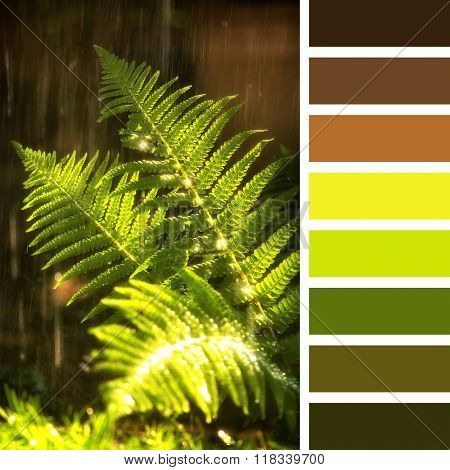 The fronds of a fern in sunlight with summer rain. In a colour palette with complimentary colour swatches.
