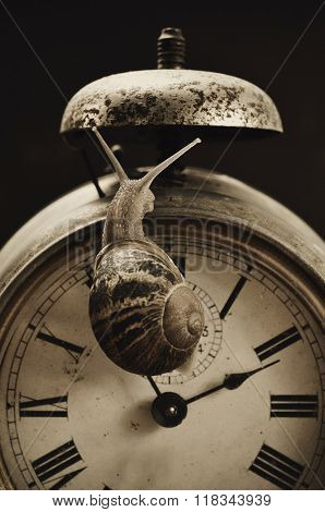 closeup of a land snail on an old and rusty alarm clock