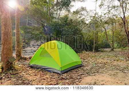 Camping Tents Underneath Big Trees In National Park.