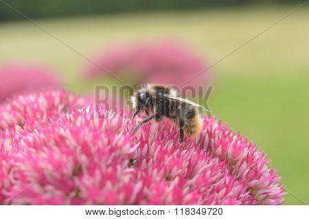 Buzz Buzz Honeybee