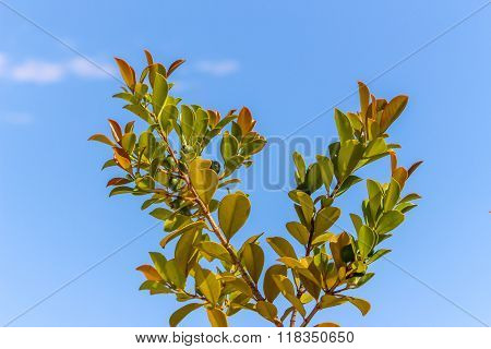 Green tree/plant with a clear blue sky in spring season