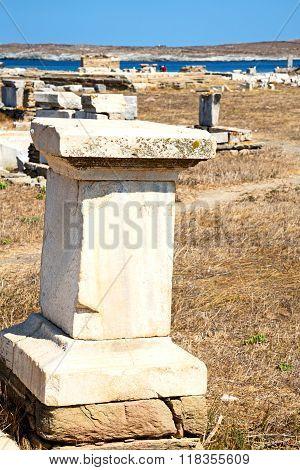 Bush   In Delos Greece The   Ruin Site